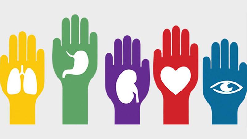 donacion de org